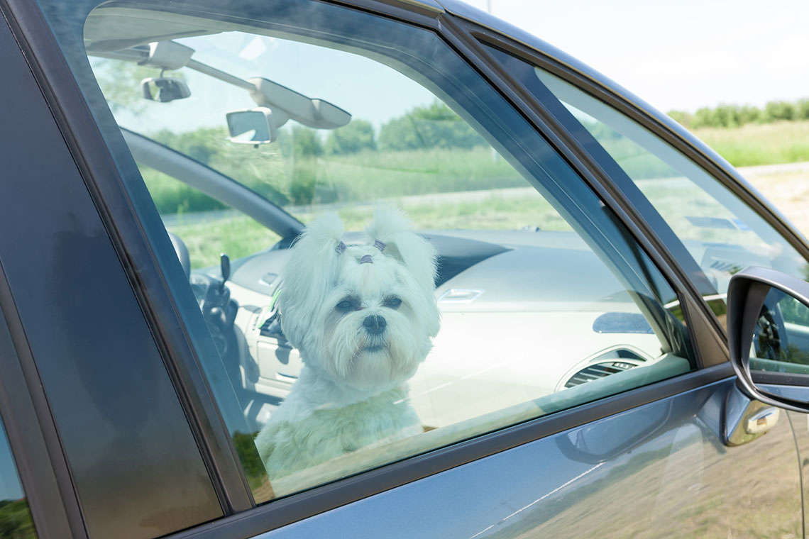 New Florida Law Permits Breaking Into Vehicles to Save People and Pets Hero Image