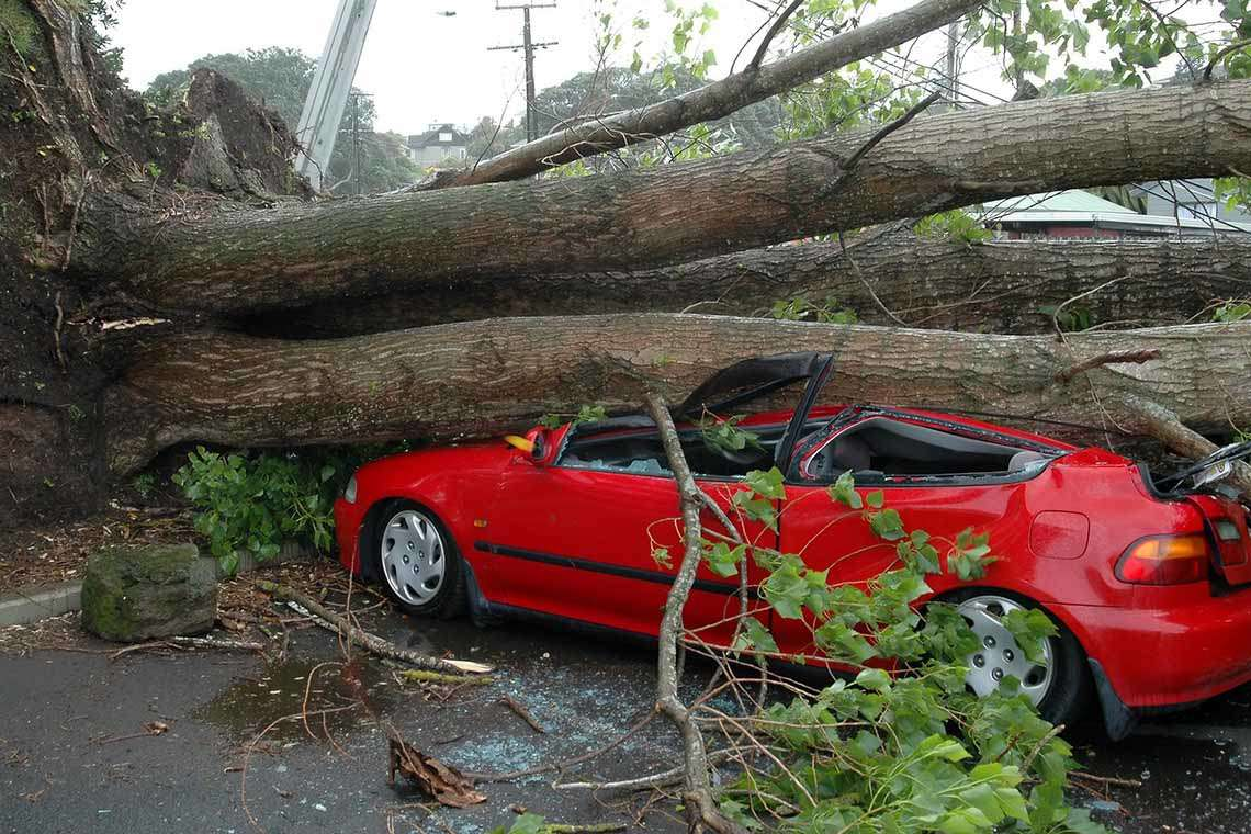 man-injured-falling-tree