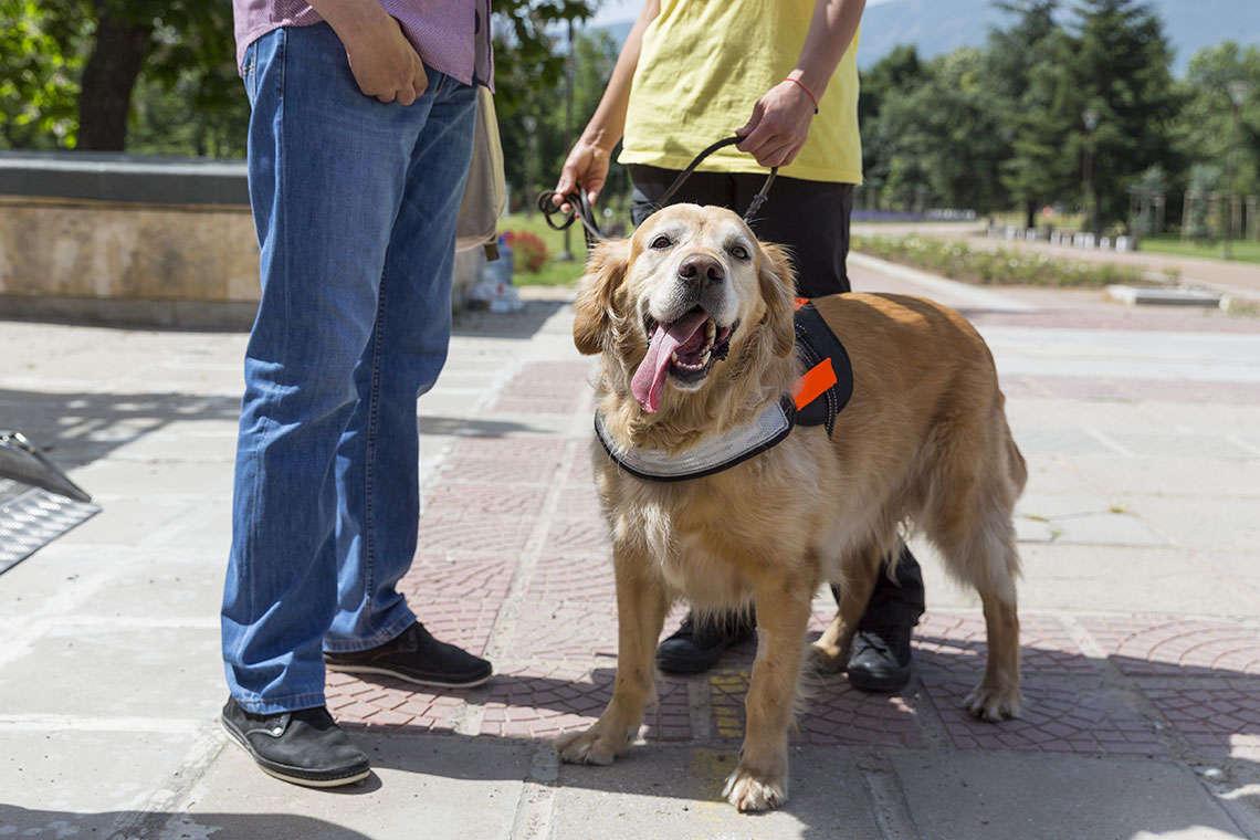 service-dog-myths-photo