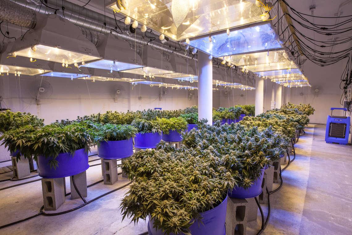 marijuana-business-grow